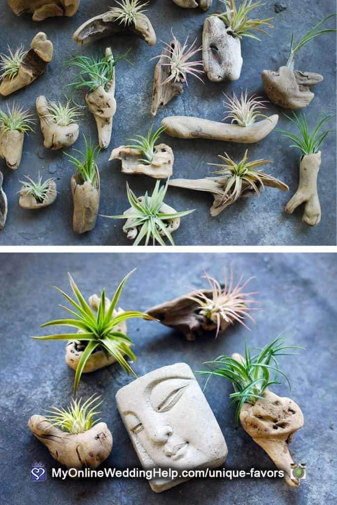 Unique Wedding Favors - Air Plant and Driftwood Refrigerator Magnets